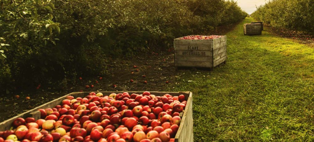 The Best Michigan Cider Mills to Visit this Fall