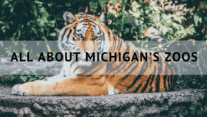All About Michigan's Zoos
