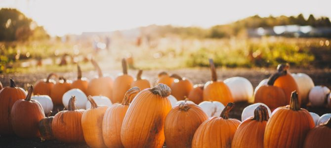 7 Fall Festivals in Michigan to Attend This Season