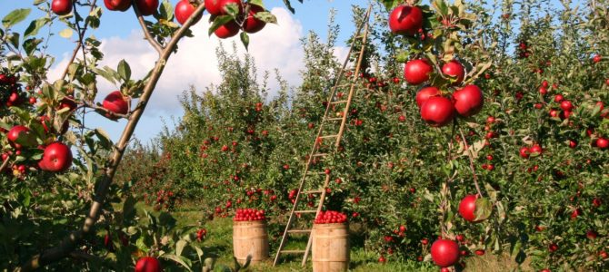 63 Cider Mills in Michigan: The Ultimate List