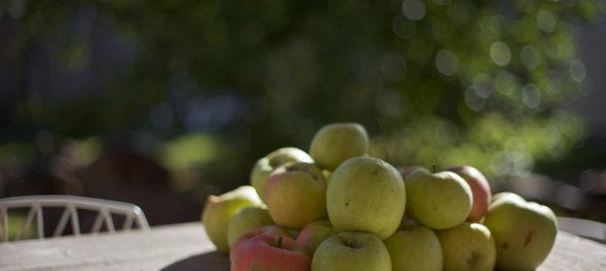 Best Apple Orchards in Southwest Michigan
