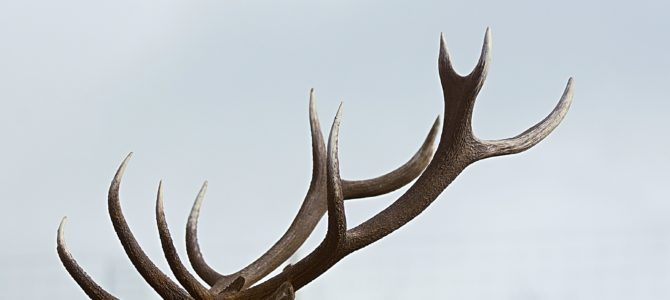 Michigan Firearm Deer Season Preparation