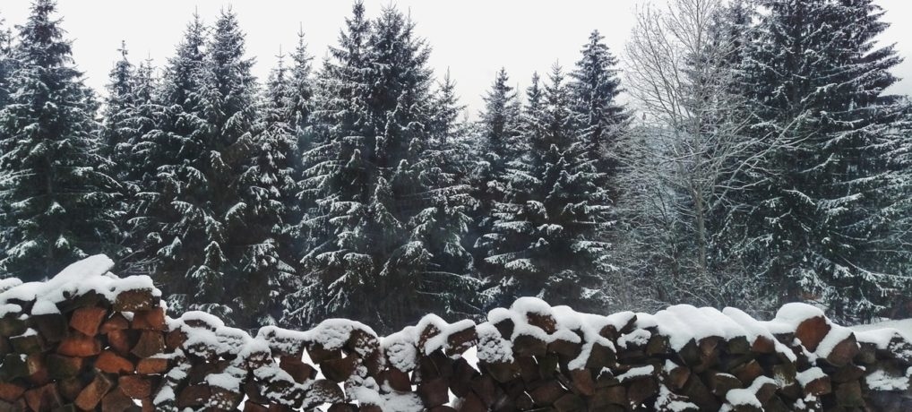 Michigan Christmas Tree Farms