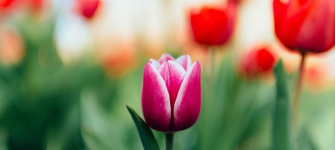 Spring Events & Festivals in Michigan
