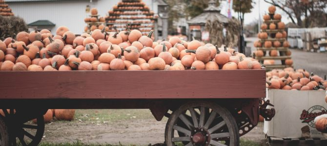 5 Favorite Fall Attractions in Southeast Michigan