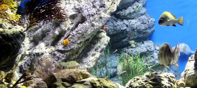 Best Aquariums in Michigan