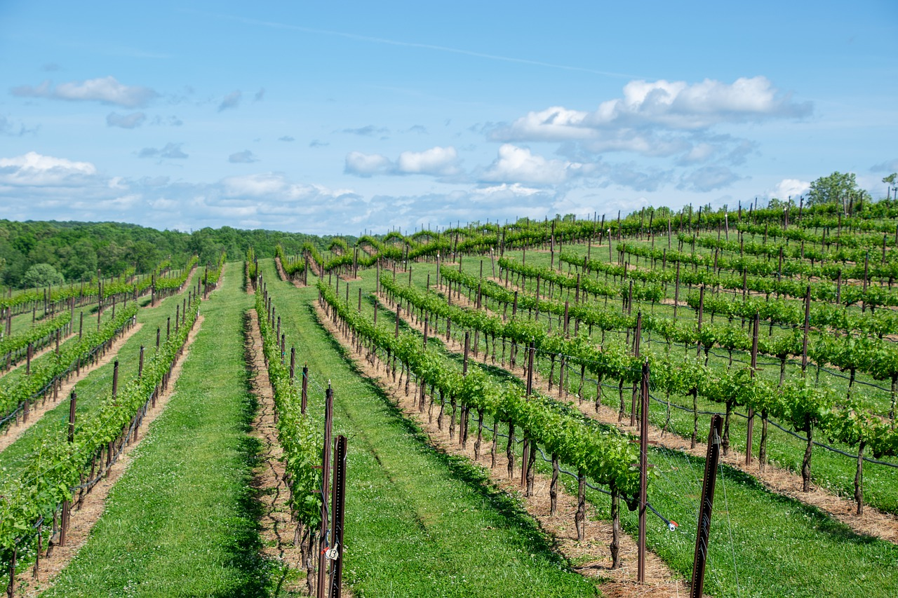 Best Wineries in Southwest Michigan