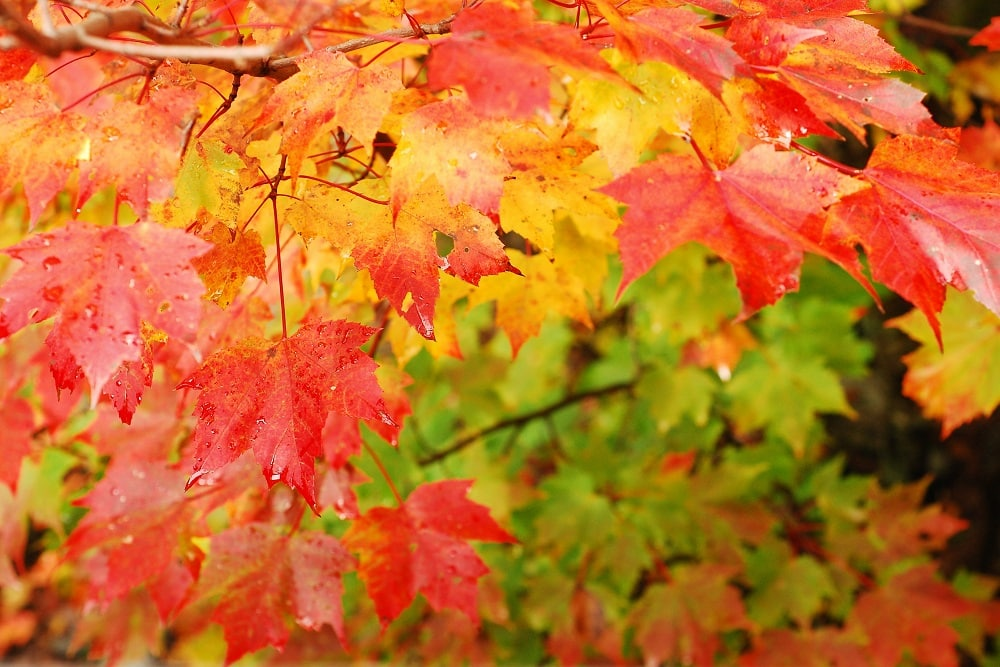 Michigan's 2020 Fall Foliage Forecast